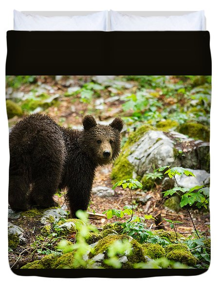 One Year Old Brown Bear In Slovenia Duvet Cover