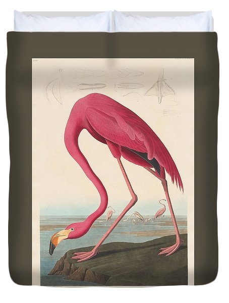 American Flamingo Duvet Cover by Rob Dreyer