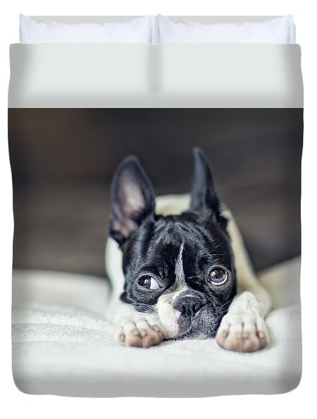 Boston Terrier Puppy Duvet Cover by Nailia Schwarz