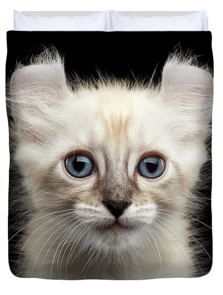 Cute American Curl Kitten With Twisted Ears Isolated Black Background Duvet Cover
