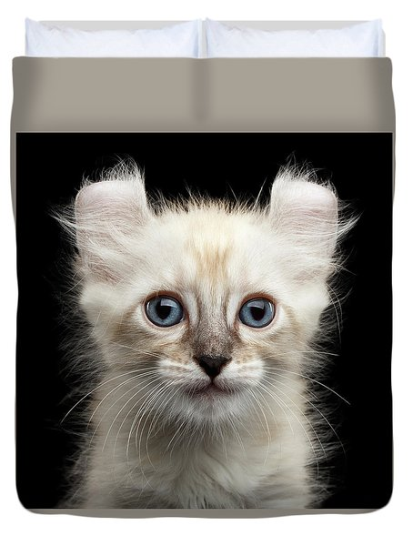 Cute American Curl Kitten With Twisted Ears Isolated Black Background Duvet Cover by Sergey Taran