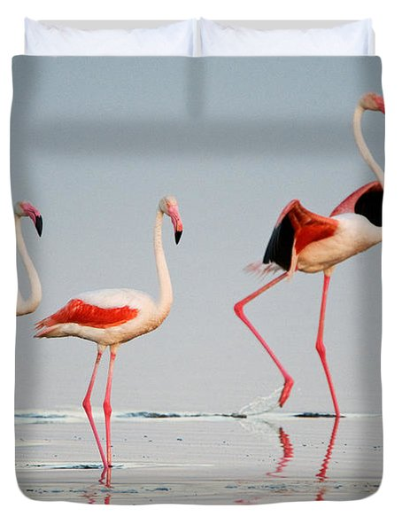 Greater Flamingos Phoenicopterus Roseus Duvet Cover