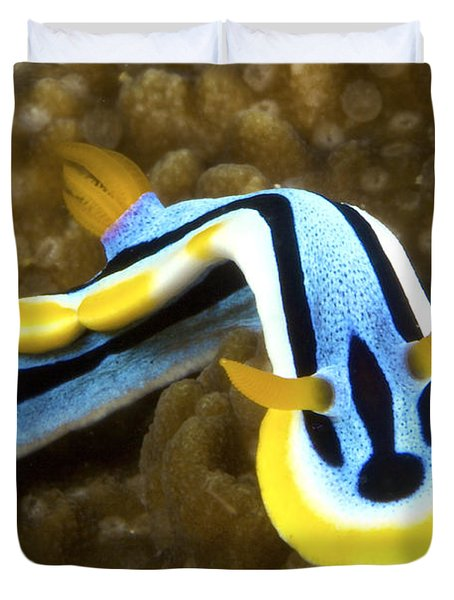 Nudibranch Feeding On Algae, Papua New Duvet Cover by Terry Moore