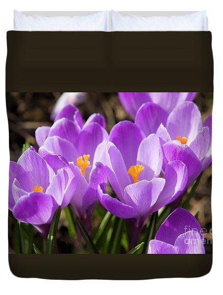 Purple Crocuses Duvet Cover by Irina Afonskaya