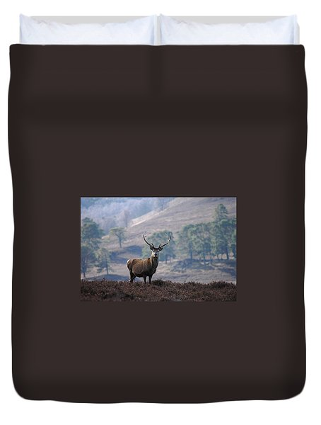 Red Deer Stag Duvet Cover