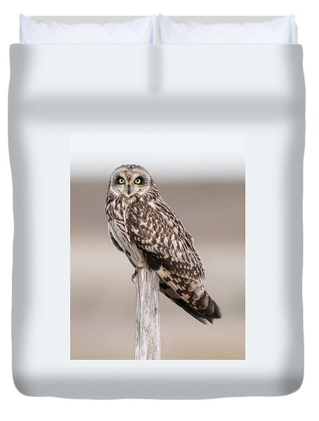Short Eared Owl Duvet Cover by Ian Hufton