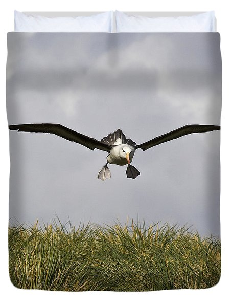 Black-browed Albatross Duvet Cover