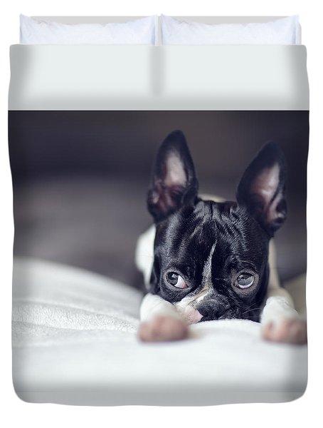 Boston Terrier Puppy Duvet Cover by Nailia Schwarz