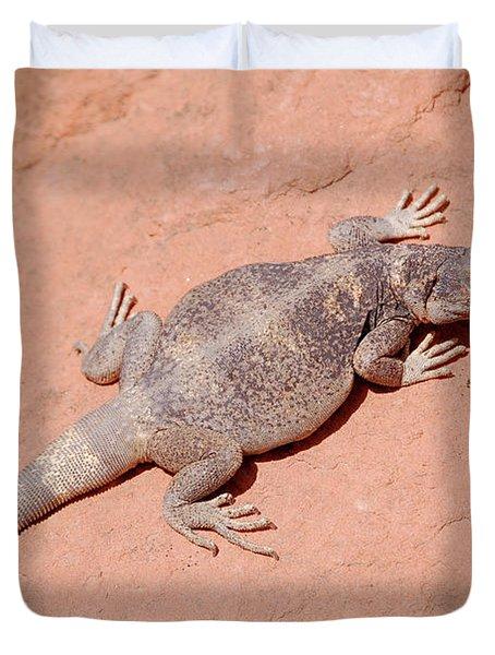 Chuckwalla, Sauromalus Ater Duvet Cover