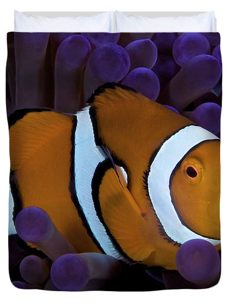 False Ocellaris Clownfish In Its Host Duvet Cover by Terry Moore