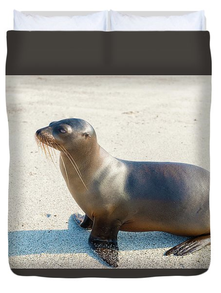 Sea Lion In Galapagos Islands Duvet Cover