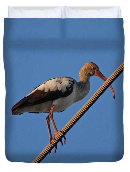 Duvet Cover featuring the photograph 8- Brown Ibis by Joseph Keane