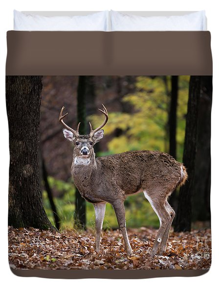 Duvet Cover featuring the photograph 8 Point Buck by Andrea Silies