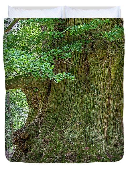 800 Years Old Oak Tree  Duvet Cover by Heiko Koehrer-Wagner