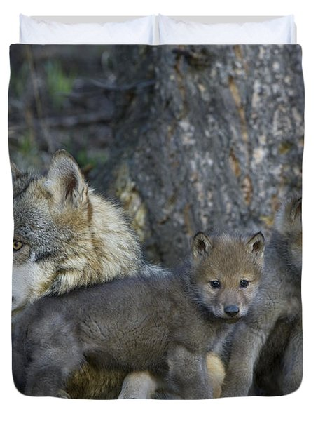 Gray Wolf And Cubs Duvet Cover