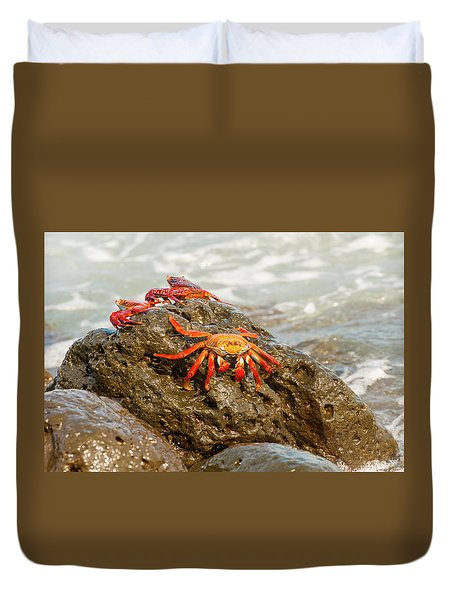 Sally Lightfoot Crab On Galapagos Islands Duvet Cover