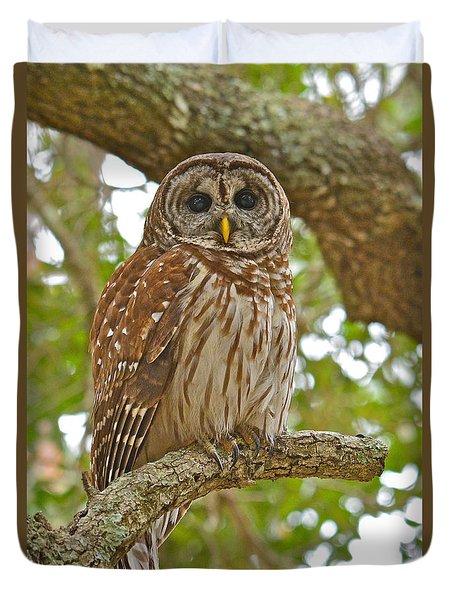 A Barred Owl Duvet Cover