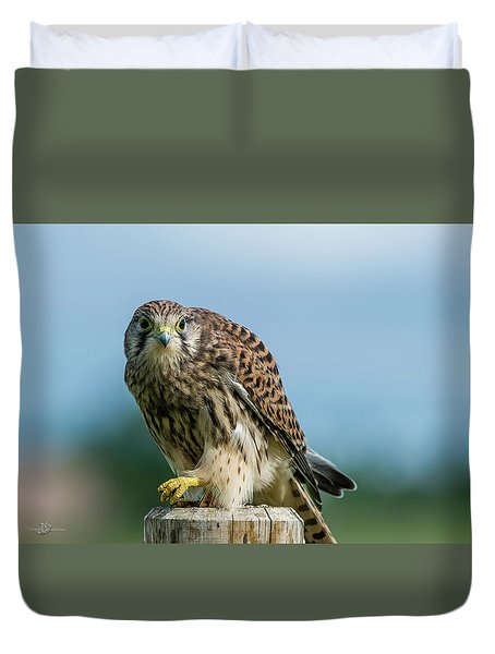 A Beautiful Young Kestrel Looking Behind You Duvet Cover