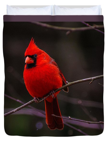 A Cardinal In January  Duvet Cover by John Harding