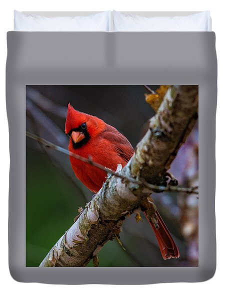 A Cardinal In Spring   Duvet Cover