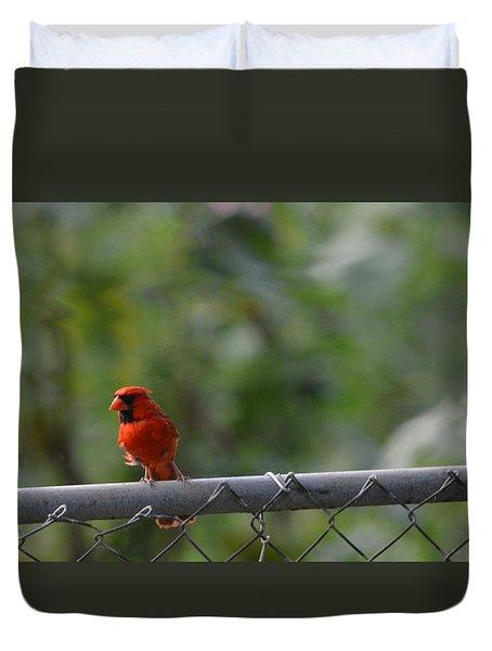 A Cardinal On A Fence Duvet Cover by Carolina Liechtenstein