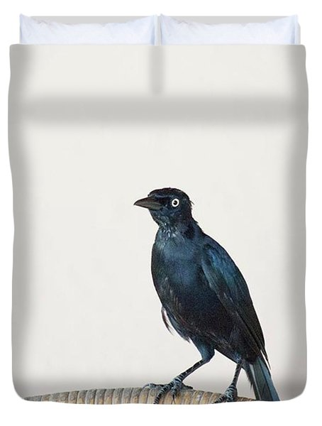 A Carib Grackle (quiscalus Lugubris) On Duvet Cover by John Edwards