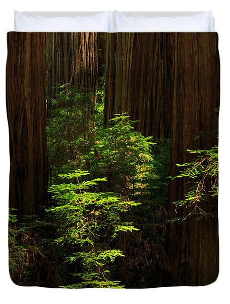 A Deer In The Redwoods Duvet Cover by James Eddy