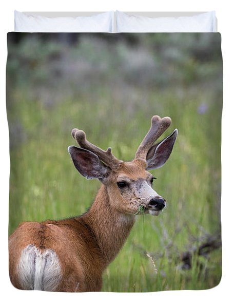 A Deer In Yellowstone National Park  Duvet Cover