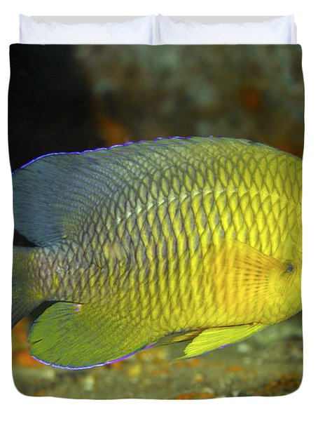 A Dusky Damselfish Offshore From Panama Duvet Cover by Michael Wood