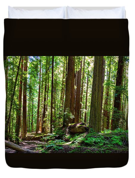 A Family Of Redwoods Panorama Duvet Cover