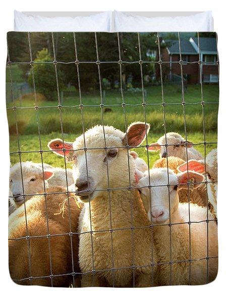 A Friendly Flock Duvet Cover