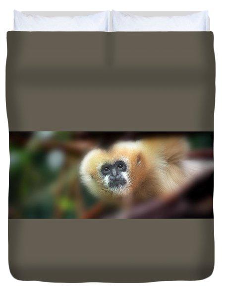 A Gibbon's Stare Duvet Cover