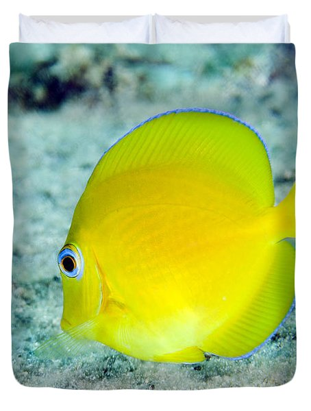 A Juvenile Blue Tang Searching Duvet Cover by Terry Moore