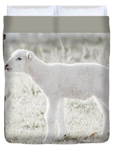 A Little Lamb Duvet Cover