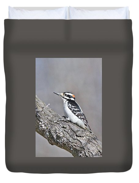 Duvet Cover featuring the photograph A Male Downey Woodpecker 1120 by Michael Peychich