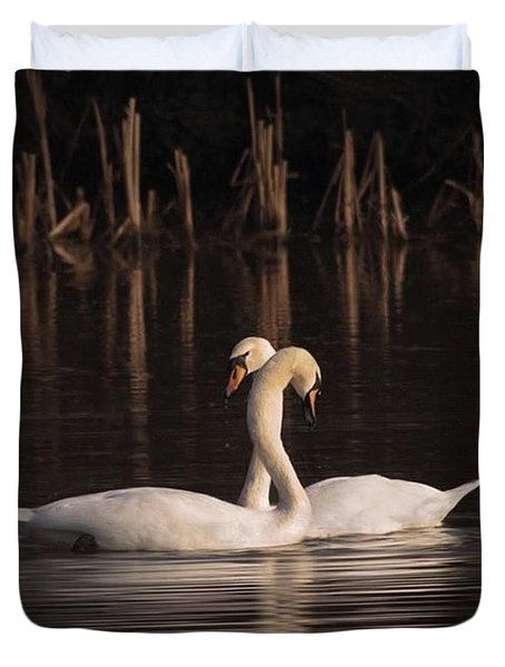 A Painting Of A Pair Of Mute Swans Duvet Cover by John Edwards