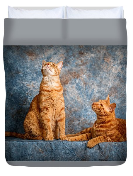 A Pair Of Cats Duvet Cover by Doug Long