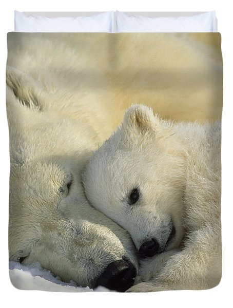 A Polar Bear And Her Cub Napping Duvet Cover