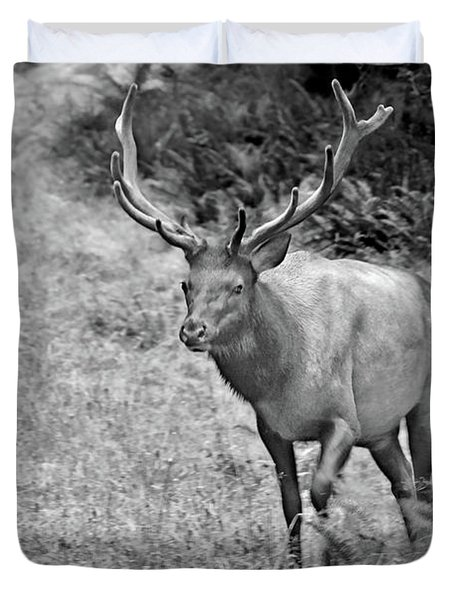 A Rack Of Antlers - Roosevelt Elk - Olympic National Park Wa Duvet Cover by Christine Till