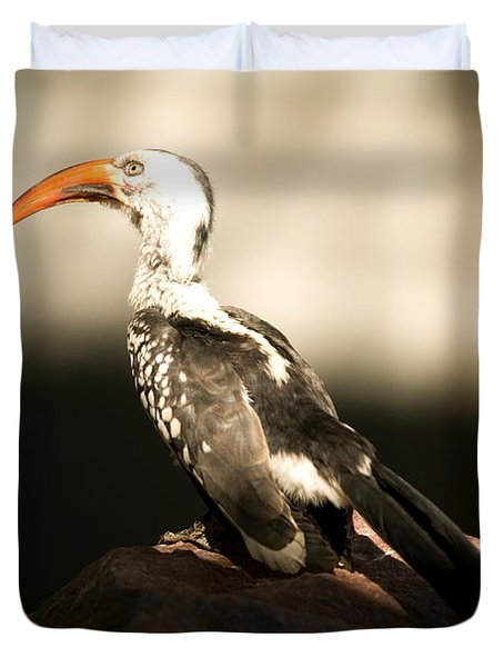 A Red-billed Hornbill At The Lincoln Duvet Cover