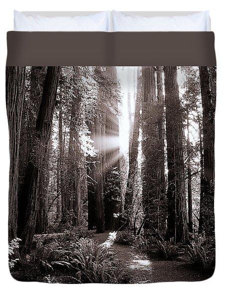 A Redwood Forrest  Duvet Cover