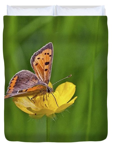 A Small Copper Butterfly (lycaena Duvet Cover by John Edwards