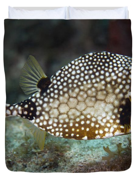 A Spotted Trunkfish, Key Largo, Florida Duvet Cover by Terry Moore