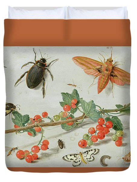 A Sprig Of Redcurrants With An Elephant Hawk Moth, A Magpie Moth And Other Insects, 1657 Duvet Cover