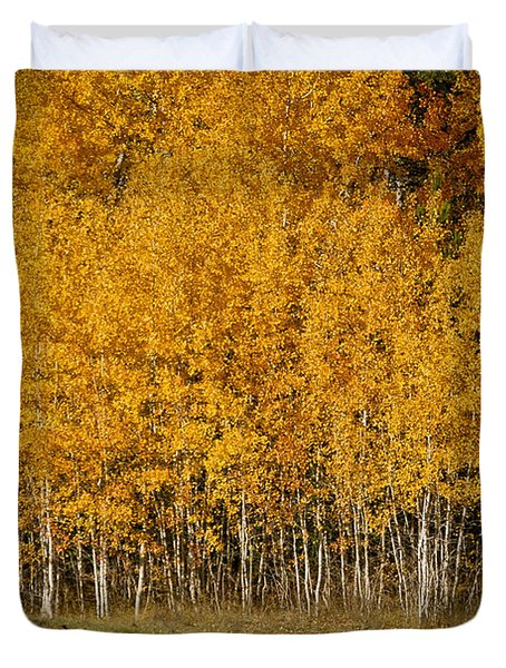 A Stand Of Aspen Duvet Cover