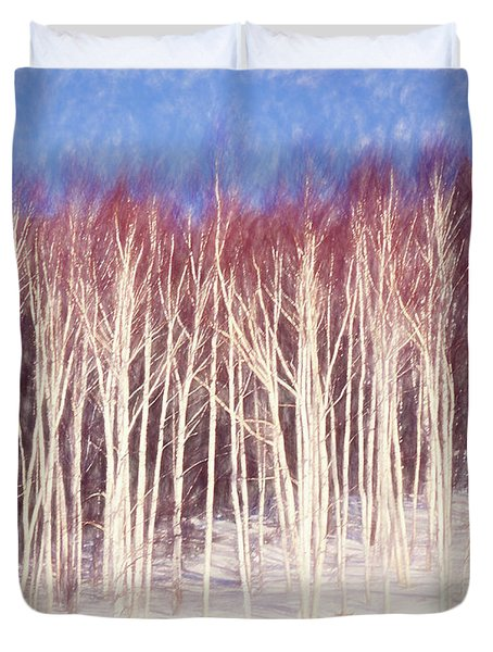 A Stand Of White Birch Trees In Winter. Duvet Cover