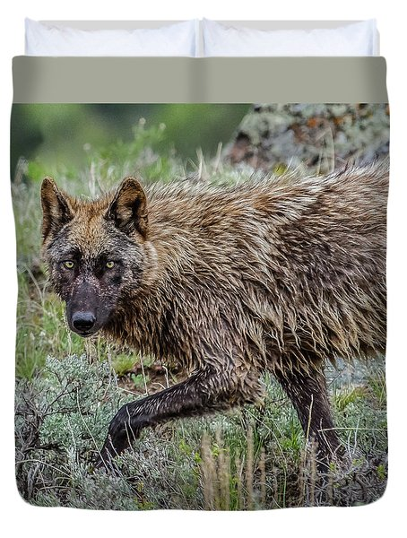 A Star In Lamar Duvet Cover by Yeates Photography