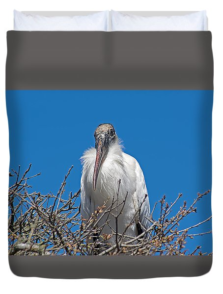 A Study In Haughty Attitude Duvet Cover by Kenneth Albin