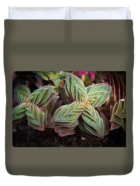 Duvet Cover featuring the photograph A Succulent Plant by Catherine Lau