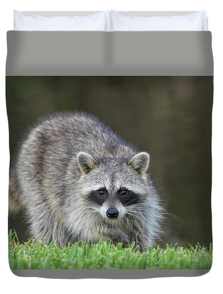 A Surprised Raccoon Duvet Cover